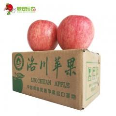 【延安扶贫馆】洛川县 苹安乐农 洛川苹果12枚/箱