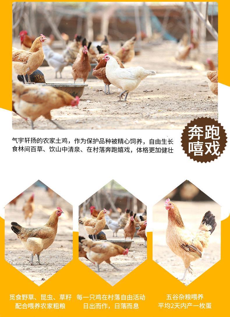 太白土鸡蛋4.jpg
